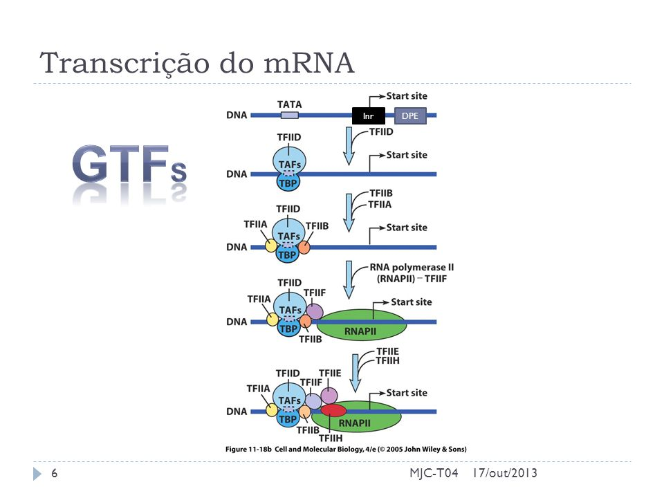 Transcrição do mRNA Inr DPE GTFs MJC-T04 17/out/2013