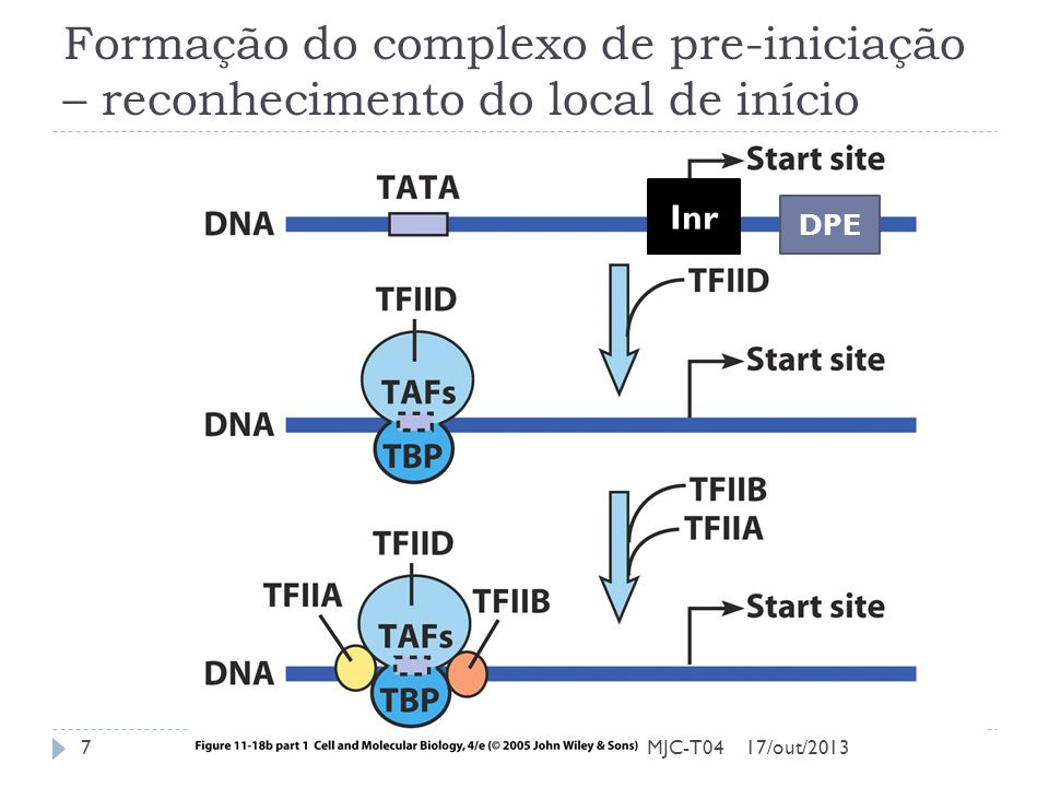 Formação do complexo de pre-iniciação – reconhecimento do local de início