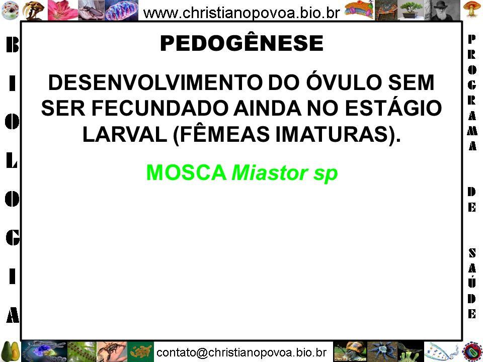 PEDOGÊNESE DESENVOLVIMENTO DO ÓVULO SEM SER FECUNDADO AINDA NO ESTÁGIO LARVAL (FÊMEAS IMATURAS).