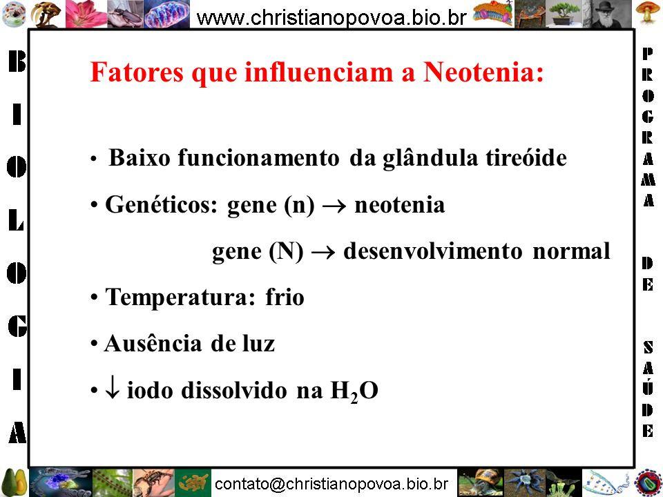 Fatores que influenciam a Neotenia: