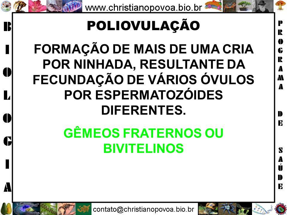 GÊMEOS FRATERNOS OU BIVITELINOS