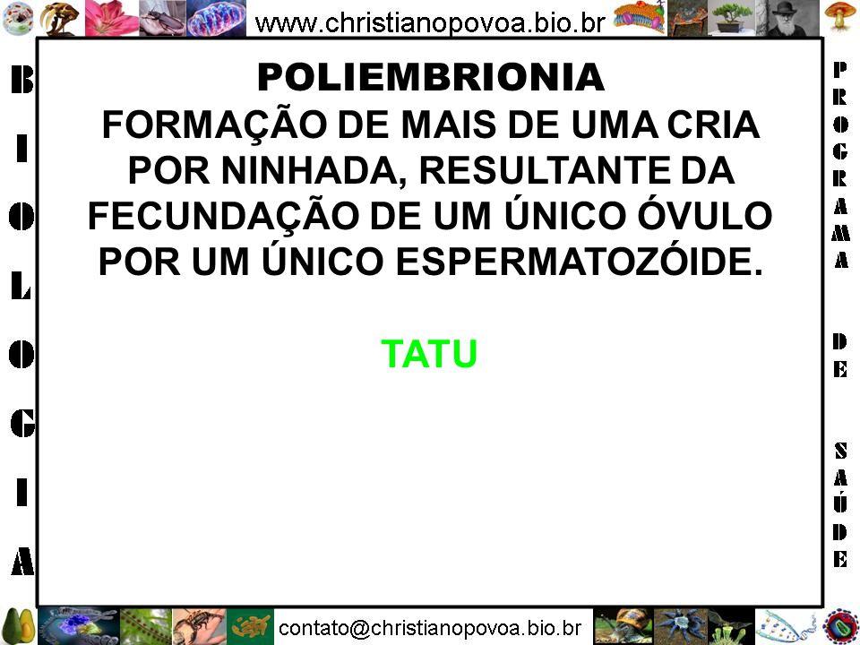 POLIEMBRIONIA FORMAÇÃO DE MAIS DE UMA CRIA POR NINHADA, RESULTANTE DA FECUNDAÇÃO DE UM ÚNICO ÓVULO POR UM ÚNICO ESPERMATOZÓIDE.
