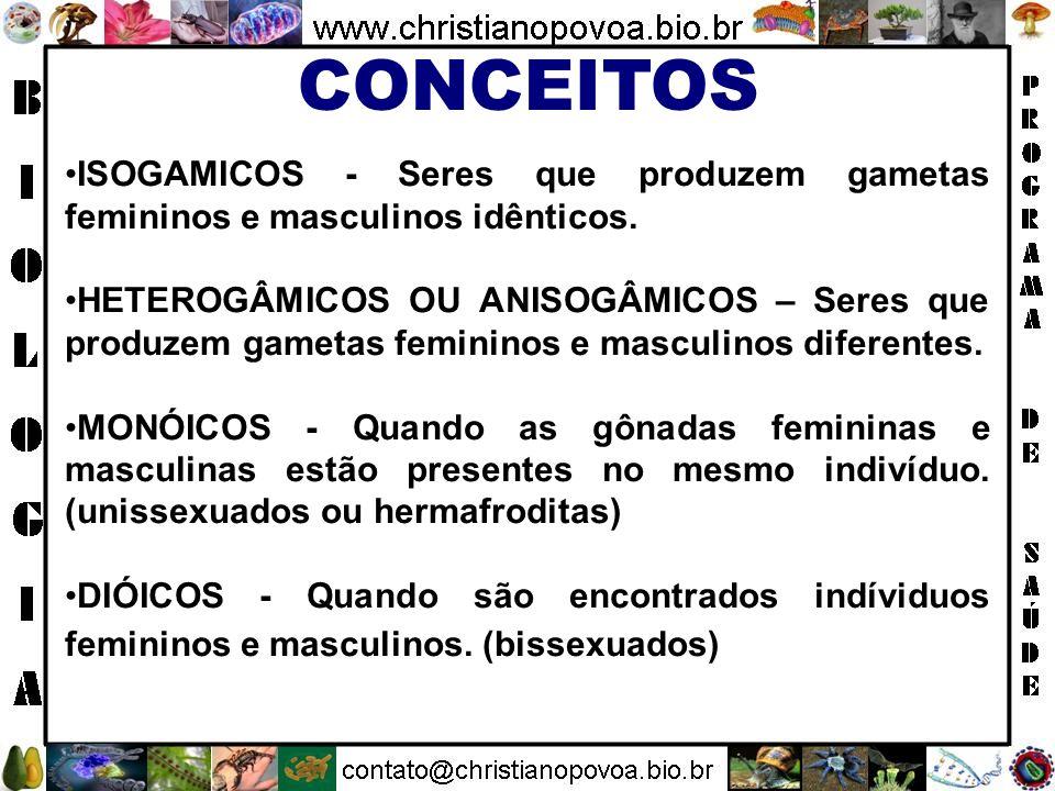 CONCEITOS ISOGAMICOS - Seres que produzem gametas femininos e masculinos idênticos.