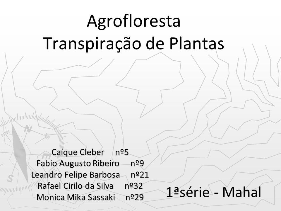 Agrofloresta Transpiração de Plantas