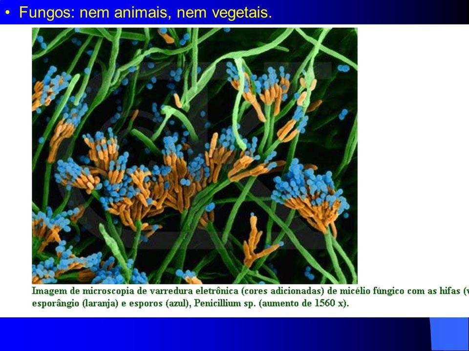 Fungos: nem animais, nem vegetais.
