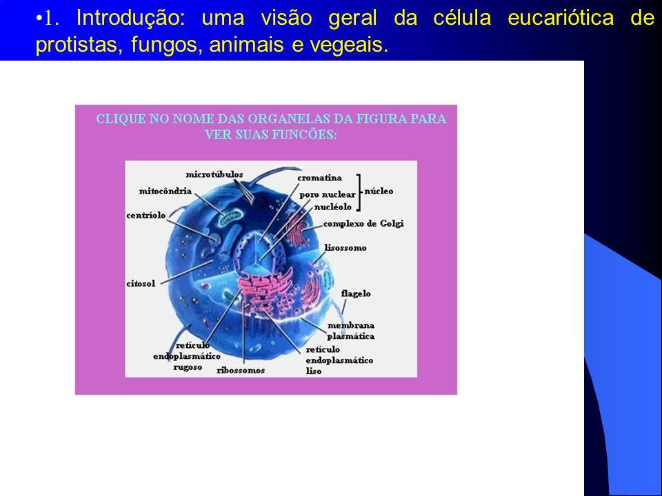 1. Introdução: uma visão geral da célula eucariótica de protistas, fungos, animais e vegeais.
