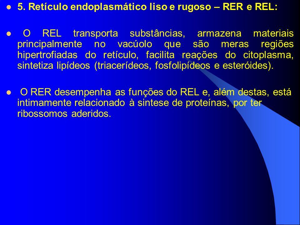 5. Retículo endoplasmático liso e rugoso – RER e REL:
