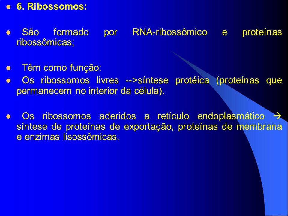 6. Ribossomos: São formado por RNA-ribossômico e proteínas ribossômicas; Têm como função: