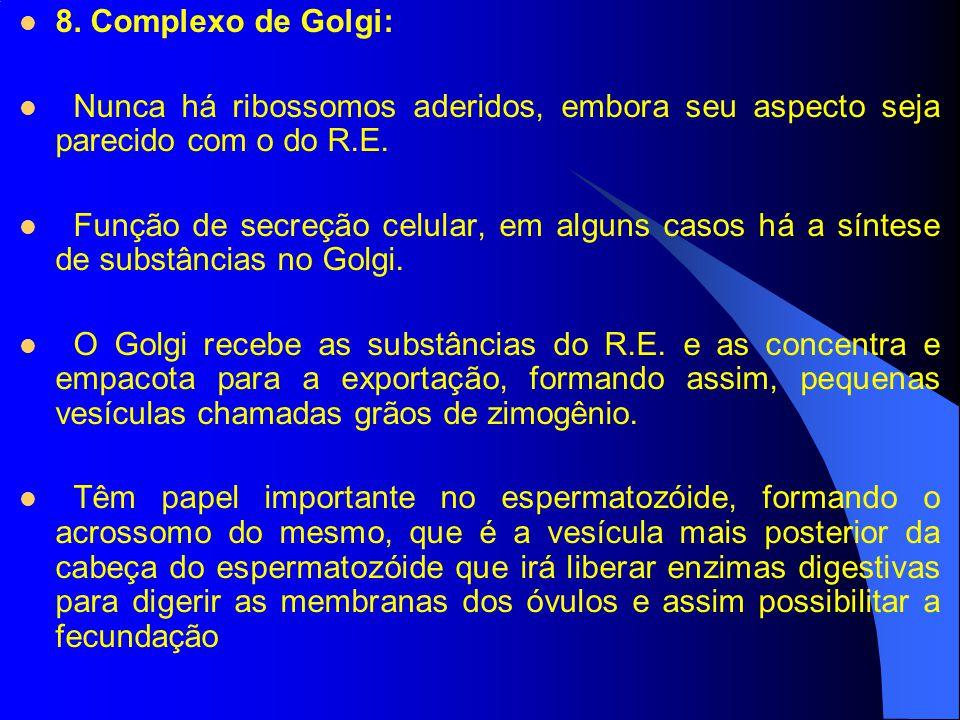 8. Complexo de Golgi: Nunca há ribossomos aderidos, embora seu aspecto seja parecido com o do R.E.