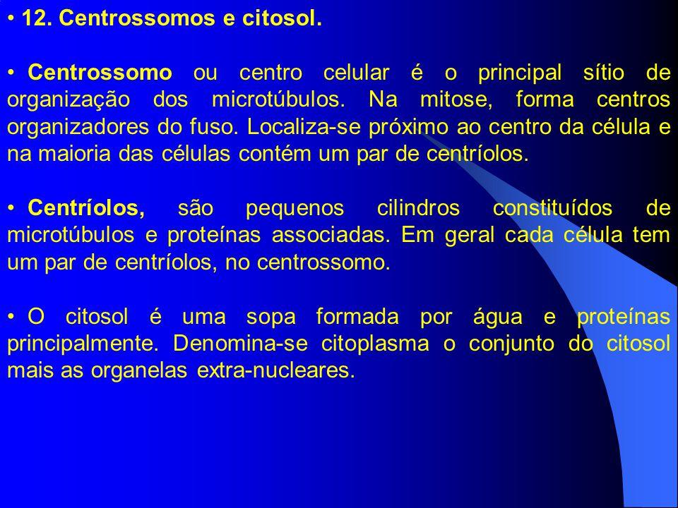 12. Centrossomos e citosol.