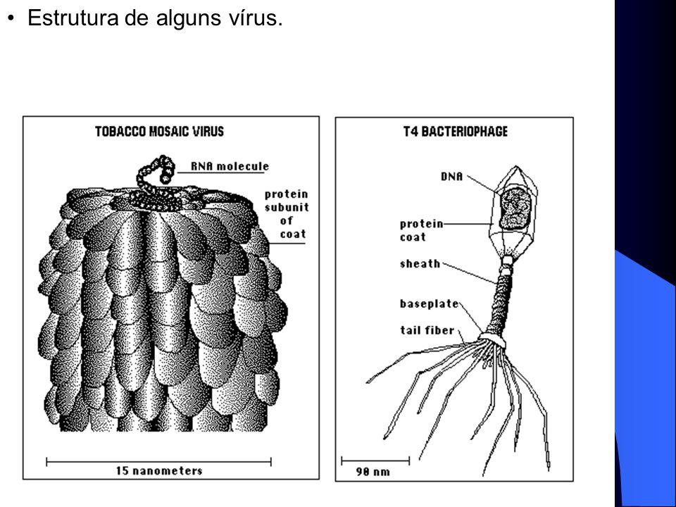 Estrutura de alguns vírus.