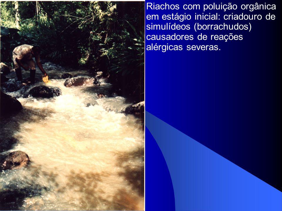 Riachos com poluição orgânica em estágio inicial: criadouro de simulídeos (borrachudos) causadores de reações alérgicas severas.