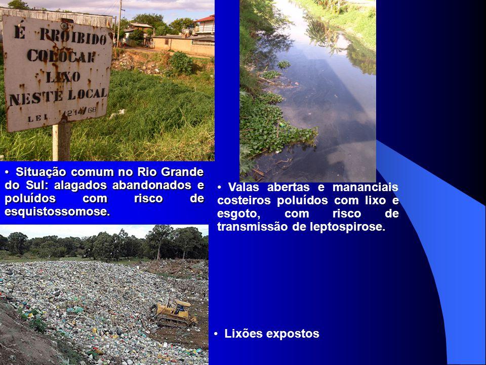 Situação comum no Rio Grande do Sul: alagados abandonados e poluídos com risco de esquistossomose.