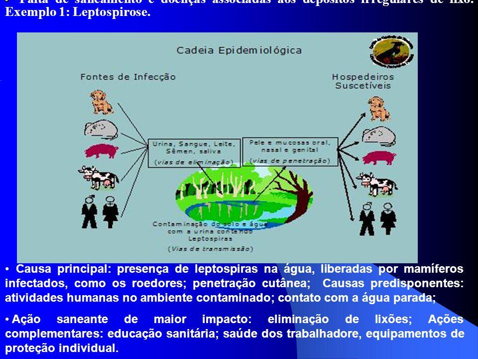 Falta de saneamento e doenças associadas aos depósitos irregulares de lixo. Exemplo 1: Leptospirose.