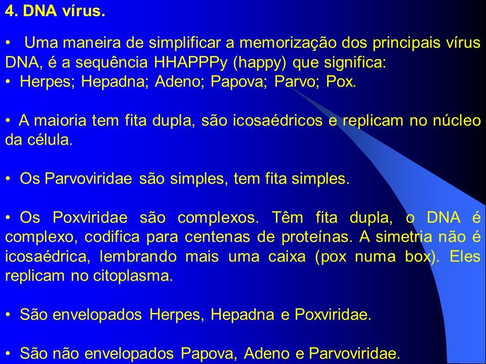 4. DNA vírus. Uma maneira de simplificar a memorização dos principais vírus DNA, é a sequência HHAPPPy (happy) que significa: