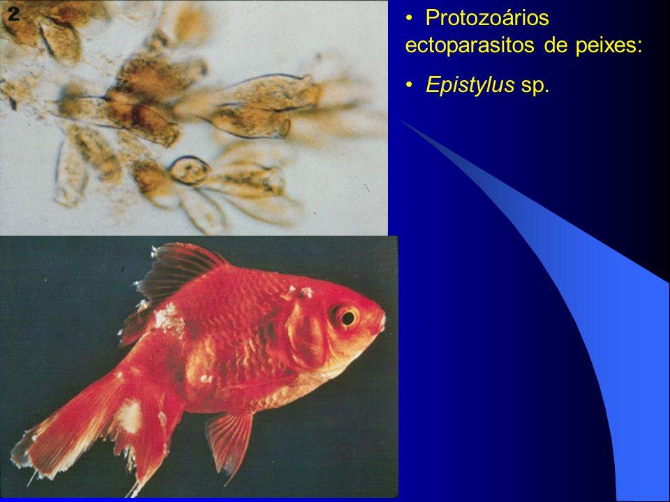 Protozoários ectoparasitos de peixes: