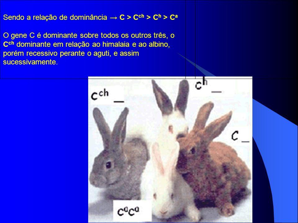 Sendo a relação de dominância → C > Cch > Ch > Ca O gene C é dominante sobre todos os outros três, o Cch dominante em relação ao himalaia e ao albino, porém recessivo perante o aguti, e assim sucessivamente.