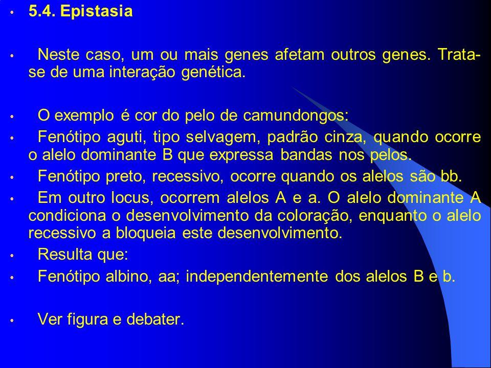 5.4. Epistasia Neste caso, um ou mais genes afetam outros genes. Trata-se de uma interação genética.