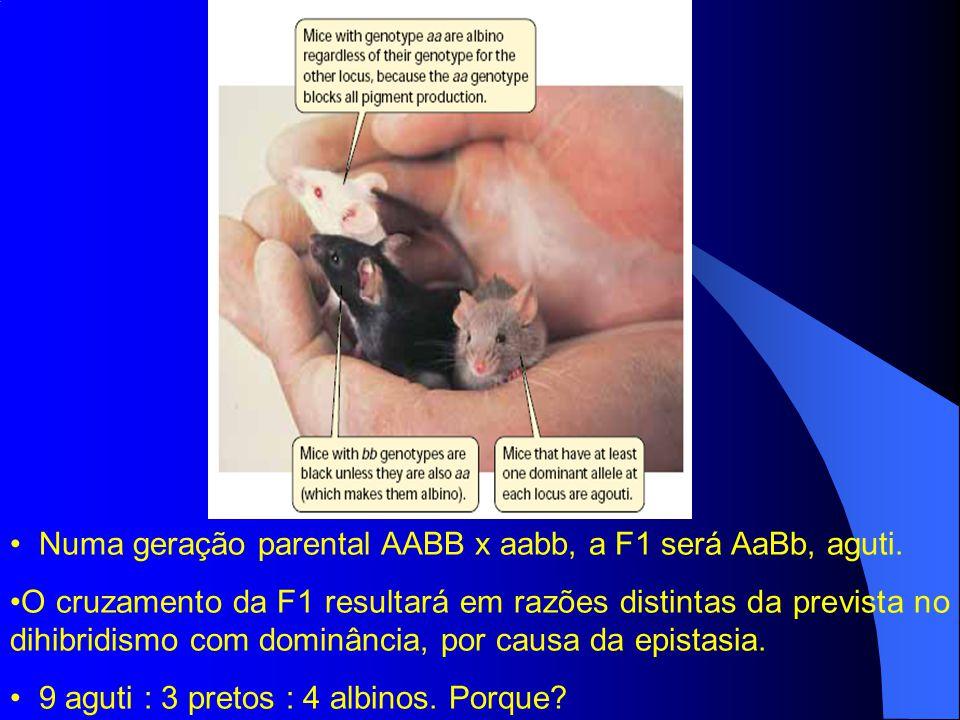 Numa geração parental AABB x aabb, a F1 será AaBb, aguti.