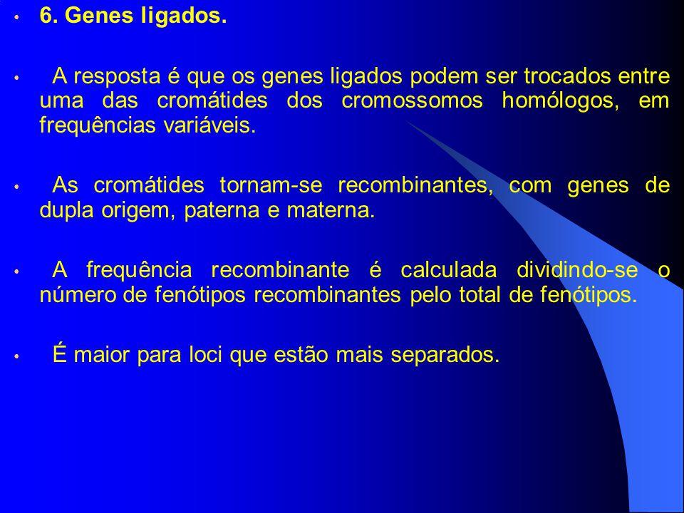 6. Genes ligados. A resposta é que os genes ligados podem ser trocados entre uma das cromátides dos cromossomos homólogos, em frequências variáveis.