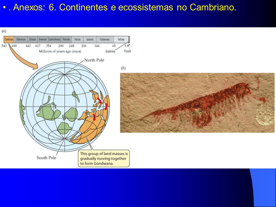. Anexos: 6. Continentes e ecossistemas no Cambriano.