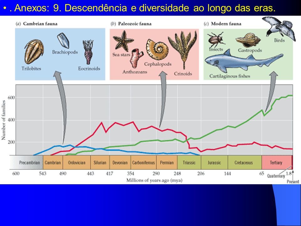 . Anexos: 9. Descendência e diversidade ao longo das eras.