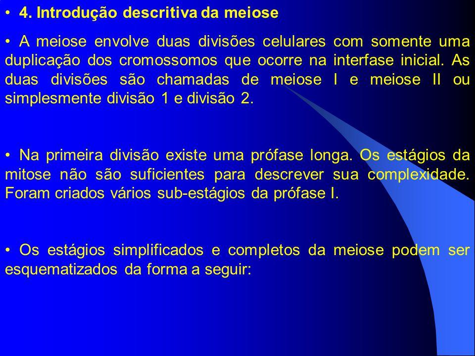 4. Introdução descritiva da meiose