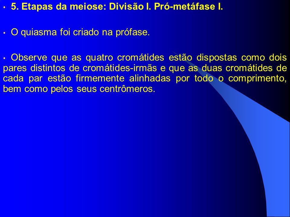 5. Etapas da meiose: Divisão I. Pró-metáfase I.