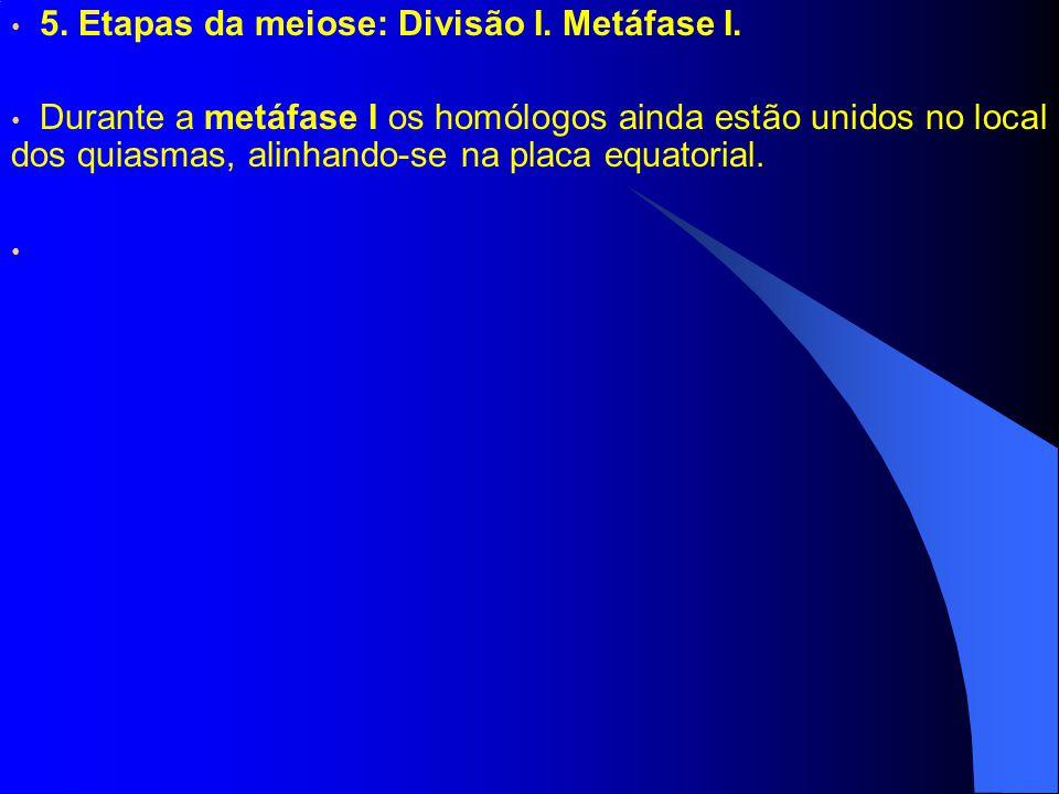 5. Etapas da meiose: Divisão I. Metáfase I.