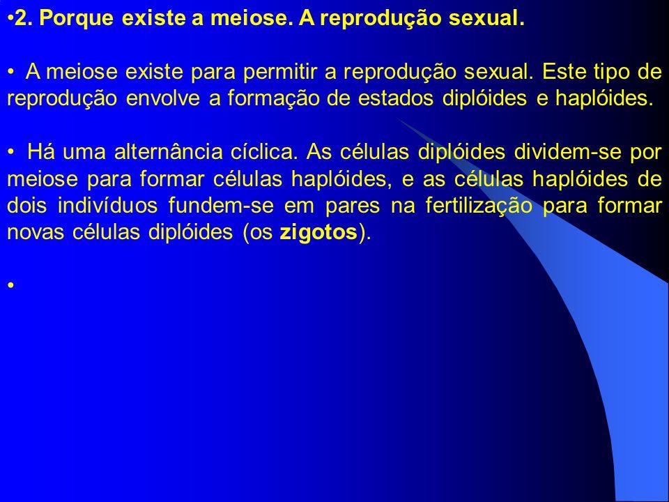 2. Porque existe a meiose. A reprodução sexual.