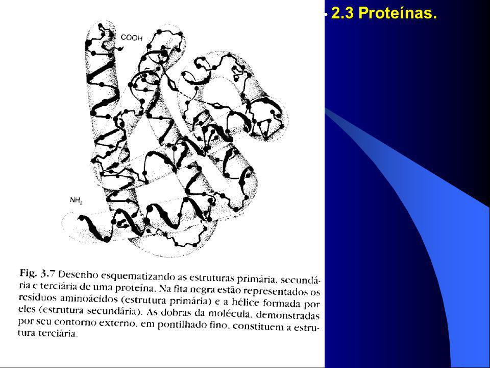2.3 Proteínas.