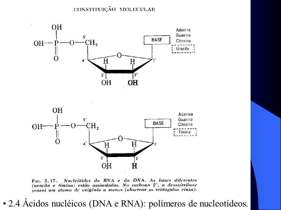 2.4 Ácidos nucléicos (DNA e RNA): polímeros de nucleotídeos.
