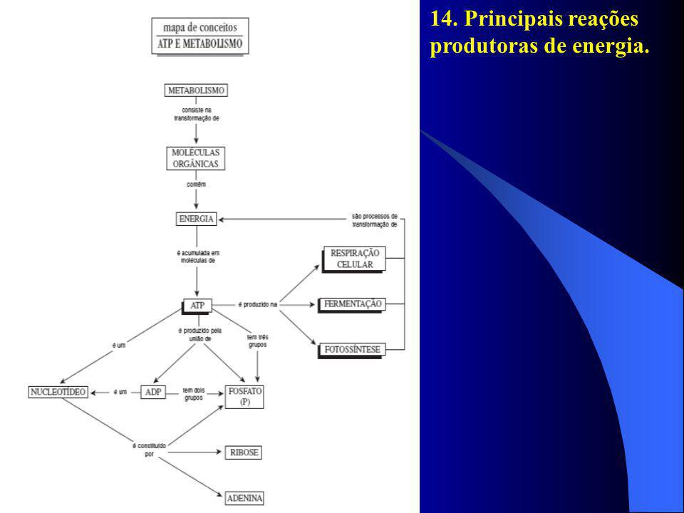 14. Principais reações produtoras de energia.