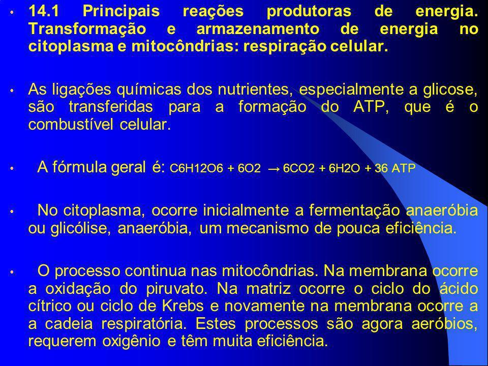 14. 1 Principais reações produtoras de energia