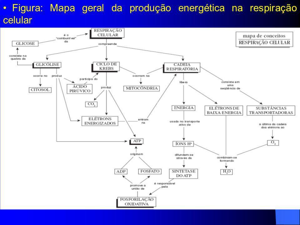 Figura: Mapa geral da produção energética na respiração celular