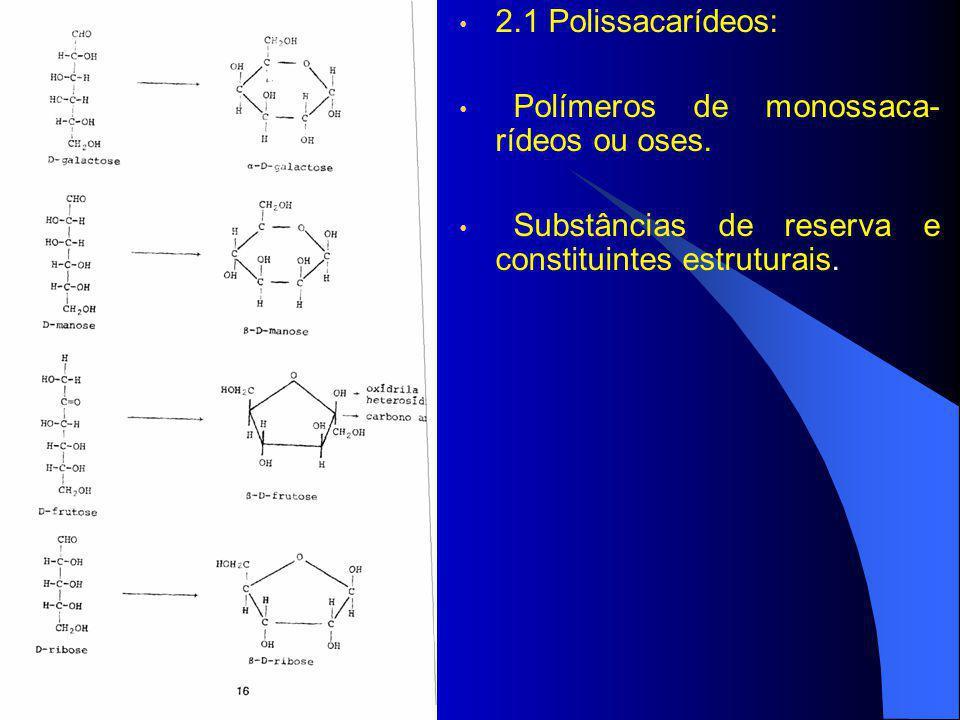 2.1 Polissacarídeos: Polímeros de monossaca-rídeos ou oses.