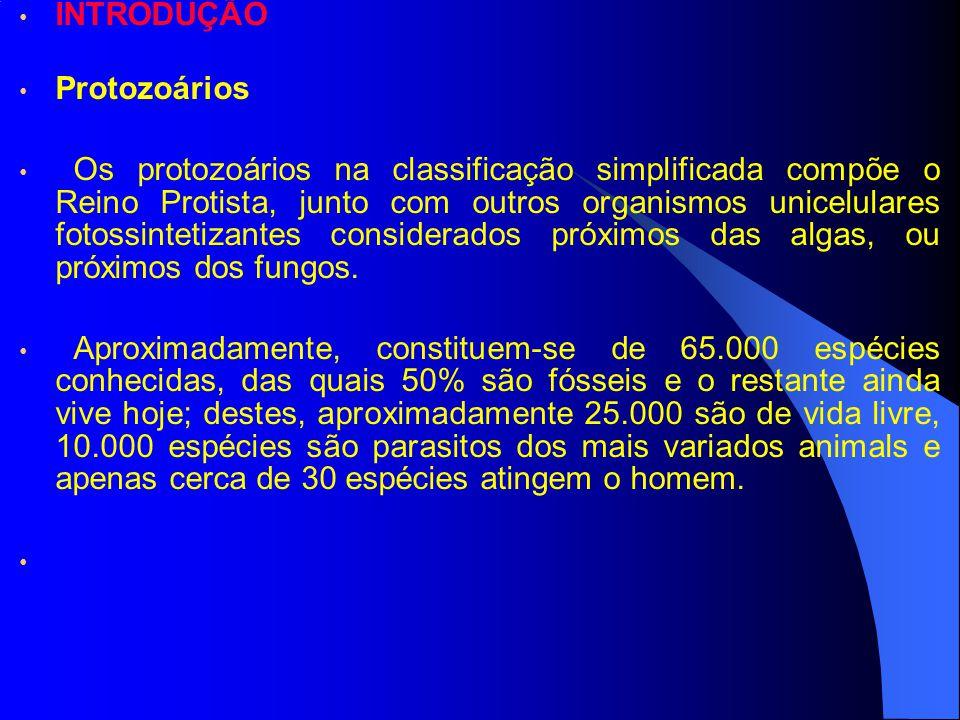INTRODUÇÃO Protozoários.