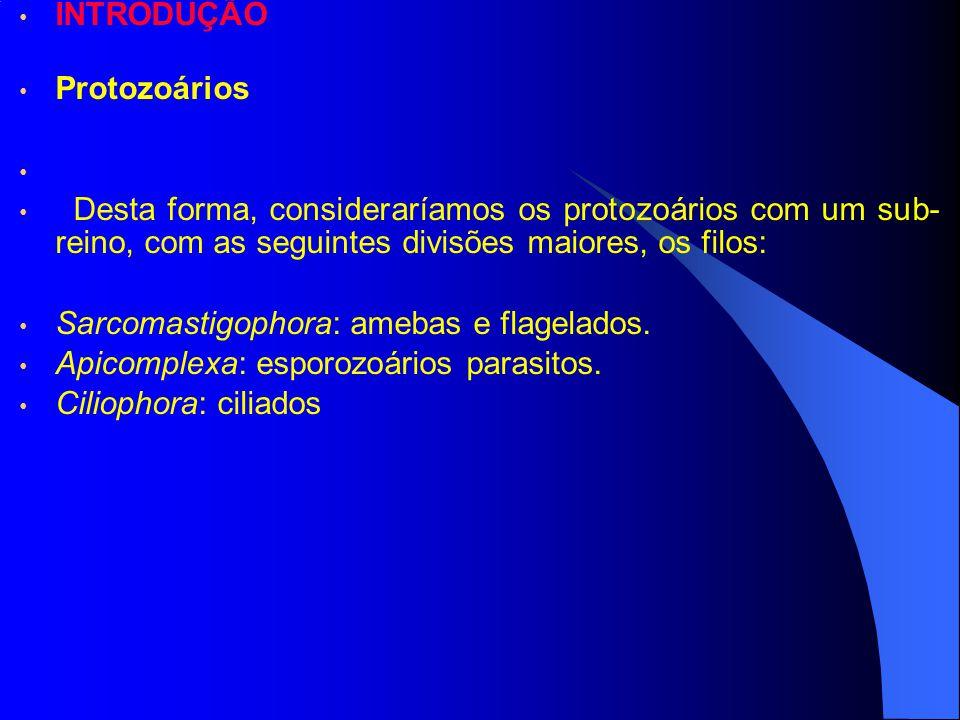 INTRODUÇÃO Protozoários. Desta forma, consideraríamos os protozoários com um sub-reino, com as seguintes divisões maiores, os filos: