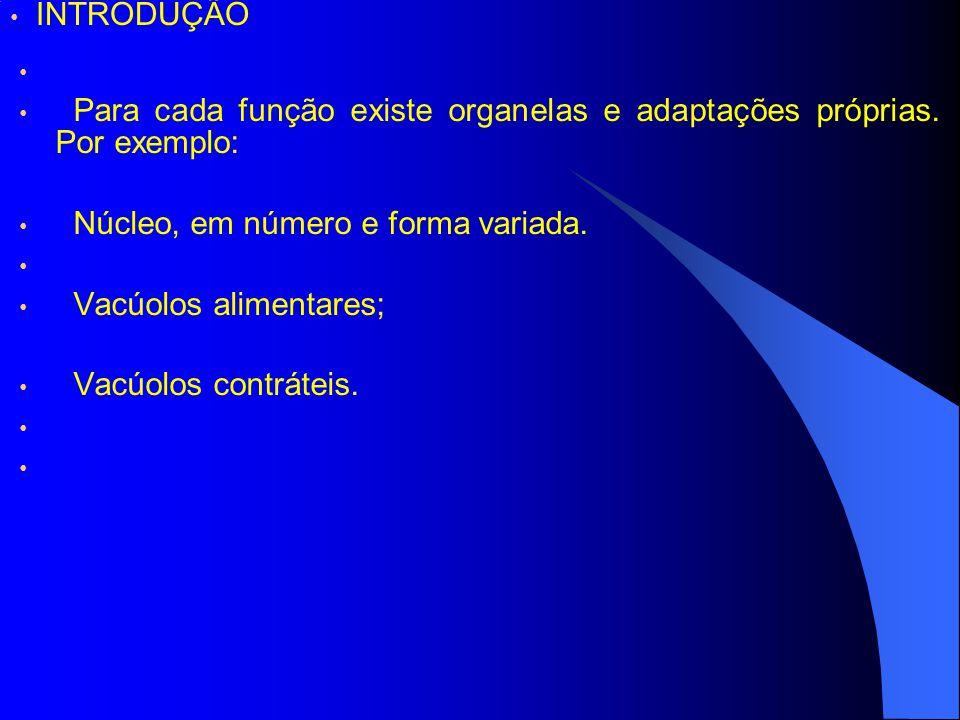 INTRODUÇÃO Para cada função existe organelas e adaptações próprias. Por exemplo: Núcleo, em número e forma variada.