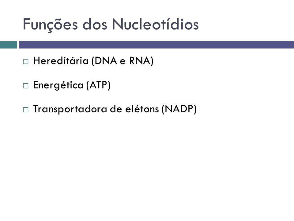 Funções dos Nucleotídios