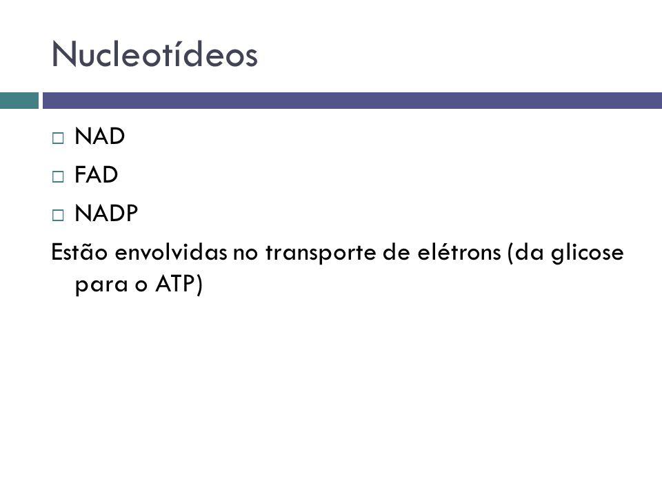 Nucleotídeos NAD FAD NADP
