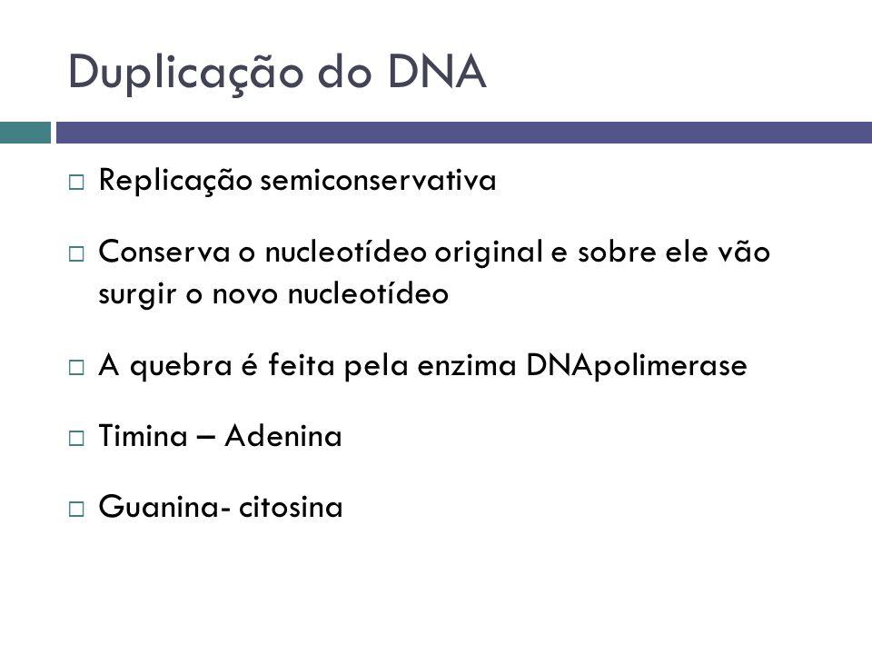 Duplicação do DNA Replicação semiconservativa