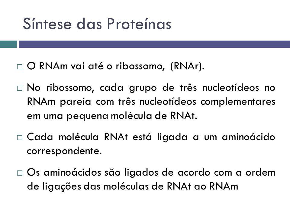 Síntese das Proteínas O RNAm vai até o ribossomo, (RNAr).