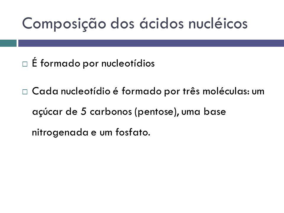 Composição dos ácidos nucléicos