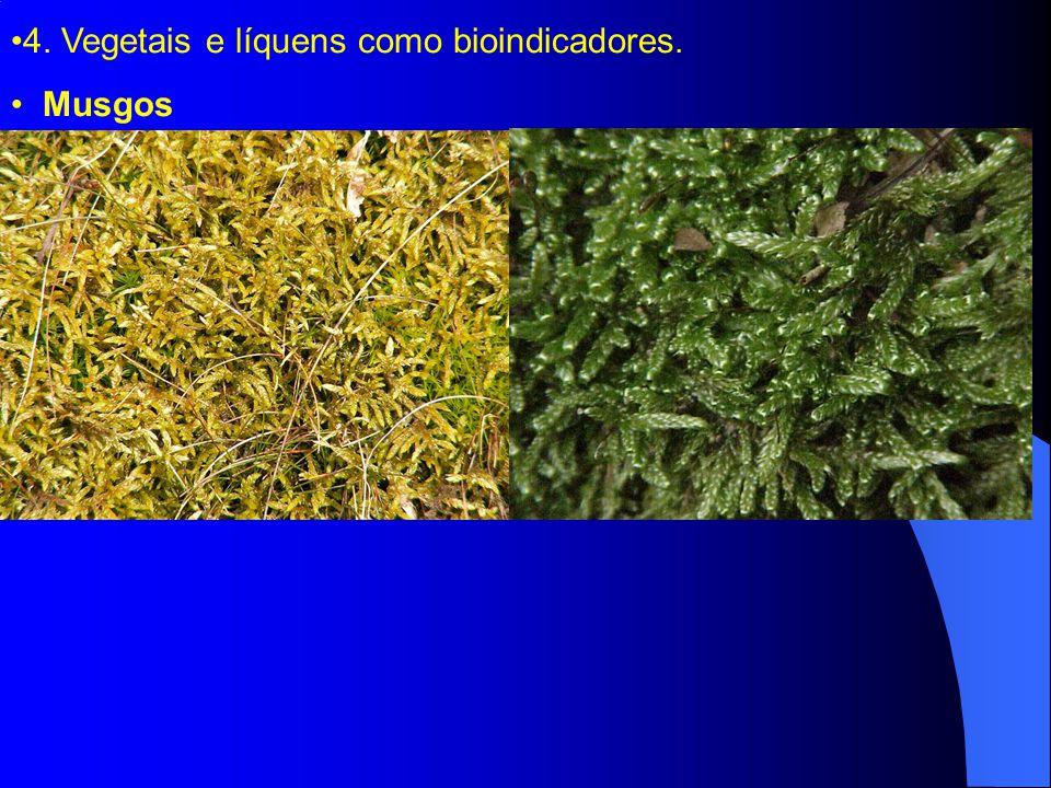 4. Vegetais e líquens como bioindicadores.
