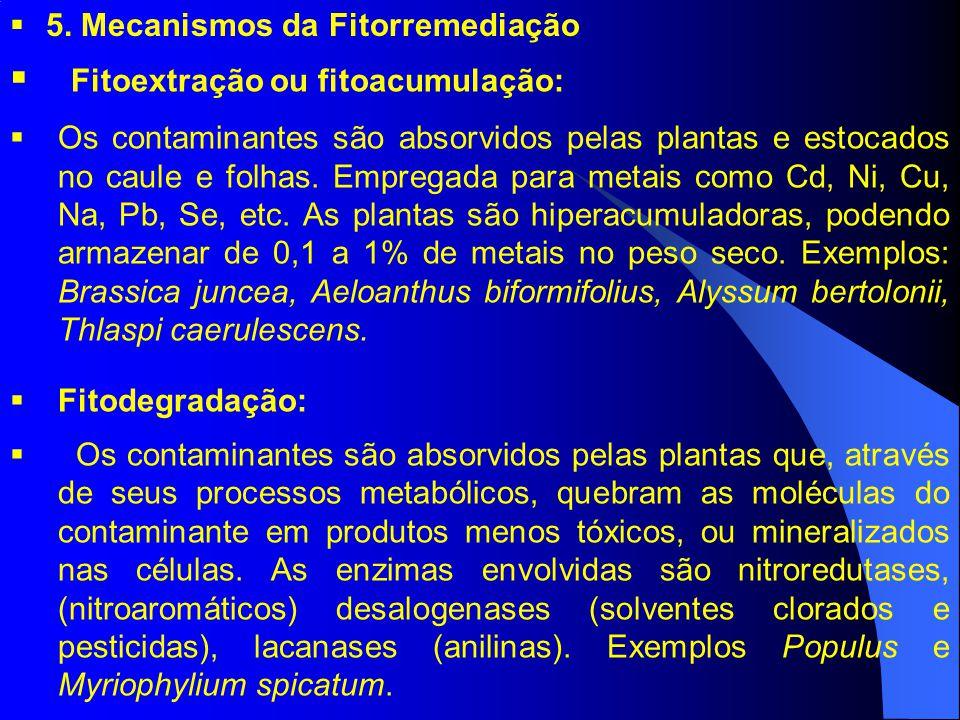 Fitoextração ou fitoacumulação: