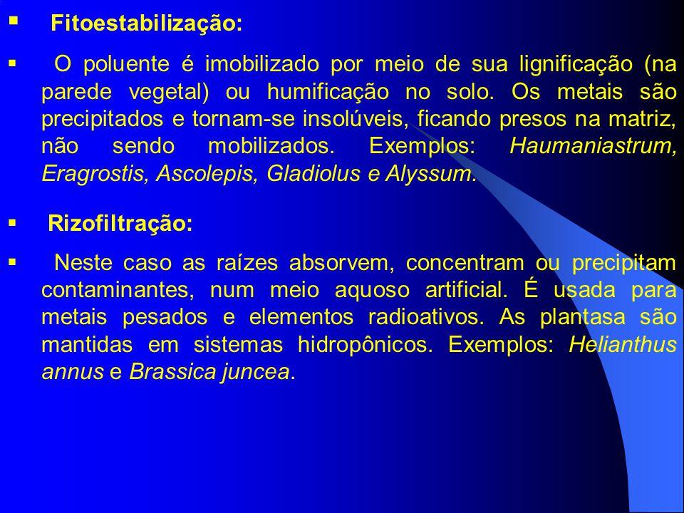 Fitoestabilização: