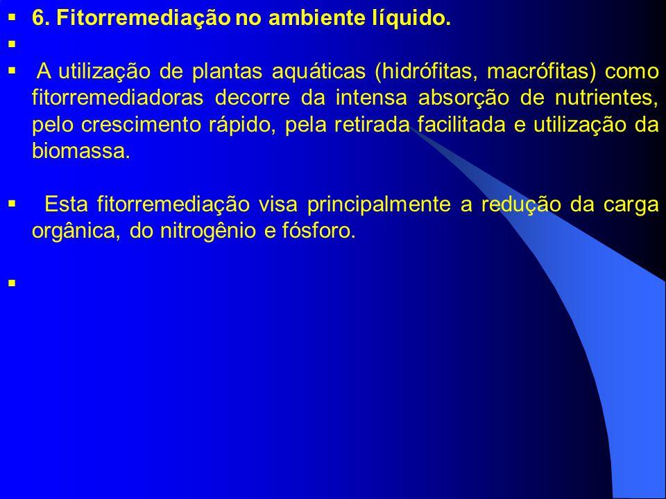 6. Fitorremediação no ambiente líquido.