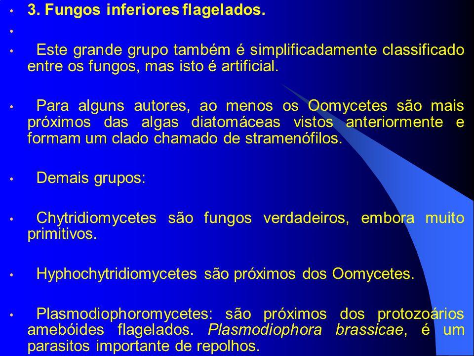 3. Fungos inferiores flagelados.