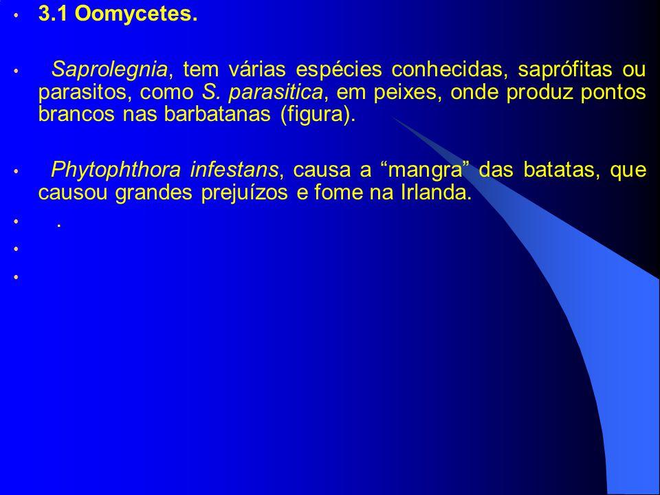 3.1 Oomycetes.